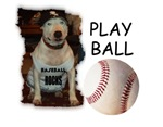 BASEBALL ROCKS ( PIT BULL)