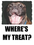 WHERE'S MY TREATS? (BULLMASTIFF DOG LOOK)