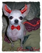 MOMMY'S LITTLE DEVIL ( Chihuahua)