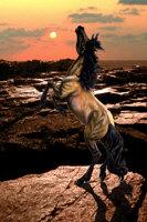 Wild Mustang by Marc Brinkerhoff