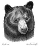 Black Bear by Marc Brinkerhoff