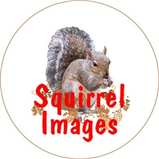 <b>SQUIRREL LOVER GIFTS</b>
