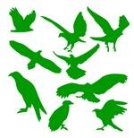 Green Eagles Silhouette