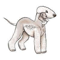 Bedlington Terrier Items