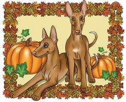 Autumn Pharaoh Hounds