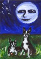BOSTON TERRIER summer night design