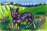 AUSTRALIAN CATTLE DOG country