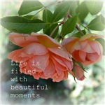 Beautiful Moments Roses