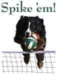 Spike 'em!