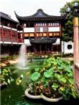 One Fountain, Many Plants, Photo / Digital Paintin
