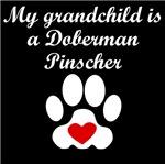 Doberman Pinscher Grandchild