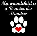 Bouvier des Flandres Grandchild