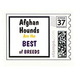 Afghan Hound Best of Breeds Products & Gifts