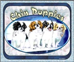 Japanese Chin Puppies Gifts & Products