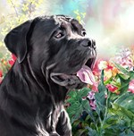 Cane Corso Painting