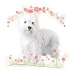 Westie Flowers