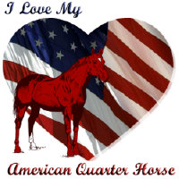 I love My American QH!