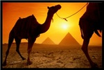 Camel of the Sun