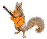 Squirrel Acoustic Guitar