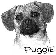 Perfect Puggle Portrait