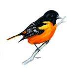 Baltimore Oriole items with this design