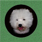 Westie items with this design, various backgrounds