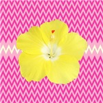 Yellow Hibiscus on Pink