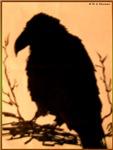 Raven, crow, bird art