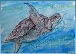 Sea Turtle, nature art