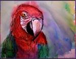 Macaw, parrot art