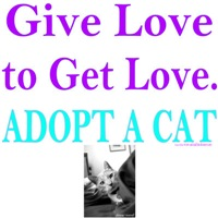 Give Love, Get Love. Adopt A Cat