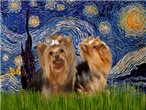 STARRY NIGHT<br>With 2 Yorkies