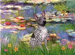 WATER LILIES<br>& American Hairless Terrier