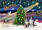 CHRISTMAS MAGIC<br>& 2 Border Collies