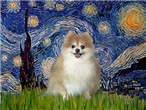 STARRY NIGHT<br>& Pomeranian #1