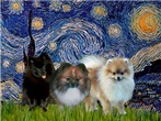 STARRY NIGHT <br>& 3 Pomeranians