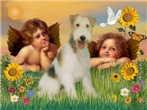 THE FAMOUS CHERUBS<br>& Wire Fox Terrier
