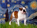 STARRY NIGHT<br>& English Bulldog (Br-white)