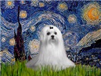 STARRY NIGHT <br>& Maltese