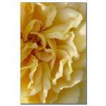 Rose Petal Close Ups