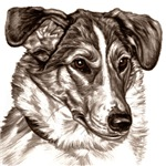 Smooth Collie Portrait Place