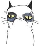 Pissy Cat