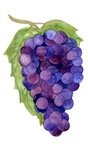 Blue Purple Grapes