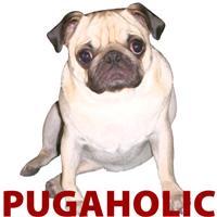 Pugaholic -Fawn