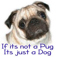 If its not a Pug