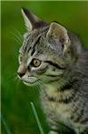 Cat photographs