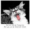 Wild Cat-And-Quote Stuff