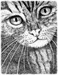 Magical Cat (Pen+Ink) Stuff