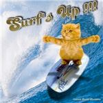 Surfs Up !!! Kitty