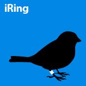 iRing (blue)
